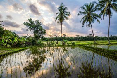 arrozales Bali
