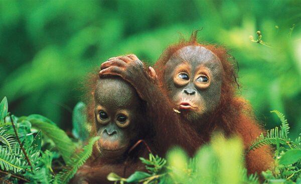 Isla Indonesia Borneo