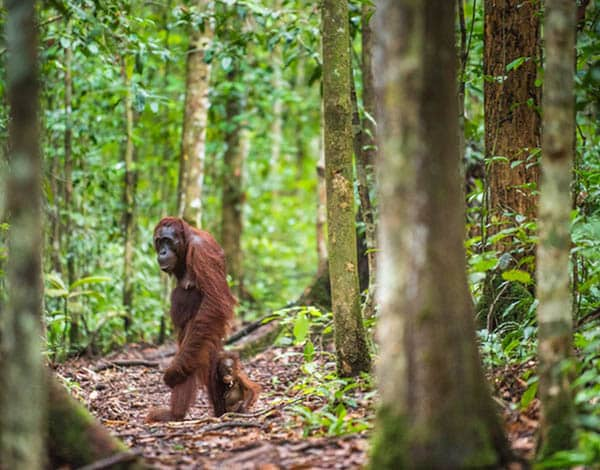 Indonesia Salvaje: Borneo – Bali – Komodo 15 Días
