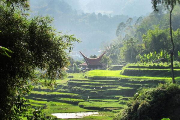 Aventura en Sulawesi Trekking - 3 dias